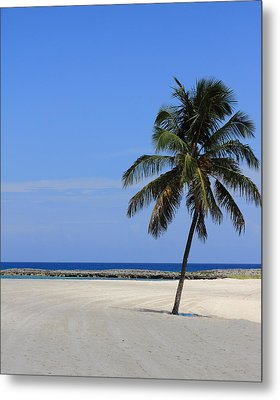 Metal Print featuring the photograph Nassau Palm by Coby Cooper