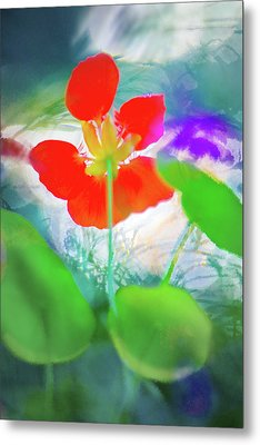 Metal Print featuring the photograph Nasturtium by Richard Piper