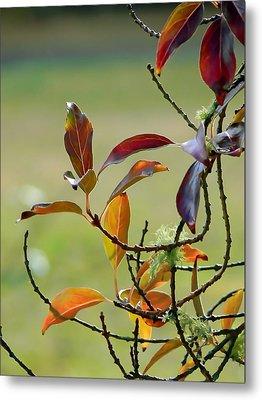 Natural Autumn Metal Print by Pamela Patch