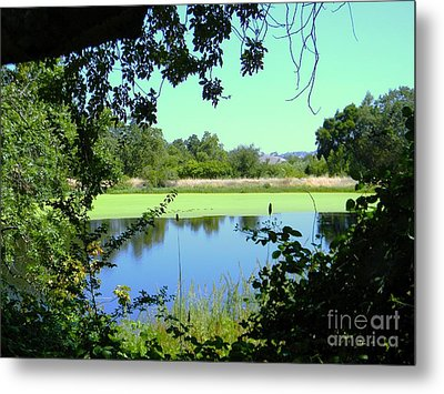 Natural Layers Metal Print by DJ Laughlin