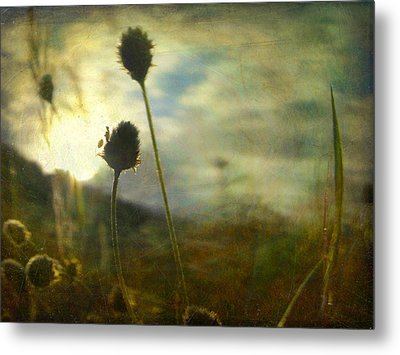 Metal Print featuring the photograph Nature #11 by Alfredo Gonzalez