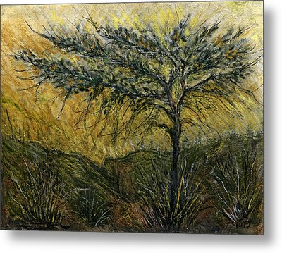 Nature Landscape Green Thorns Acacia Tree Flowers Sunset In Yellow Clouds Sky  Metal Print