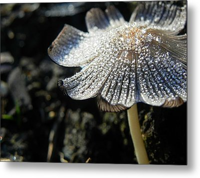 Nature's Bling Metal Print by Leah Moore