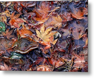 Nature's Confetti 1 Metal Print by Erica Hanel
