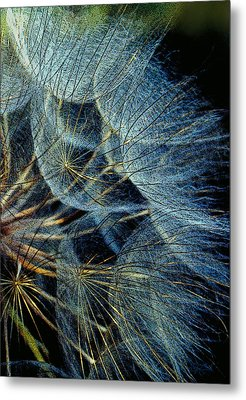 Nature's Fireworks Metal Print