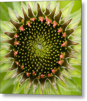 Metal Print featuring the photograph Nature's Geometry by Carrie Cranwill