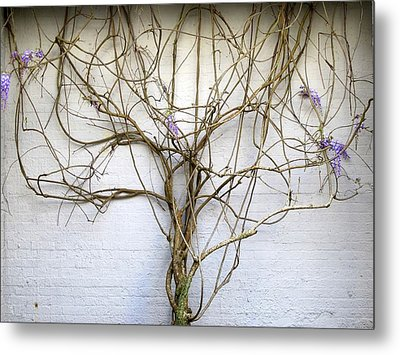 Nature's Growth Metal Print