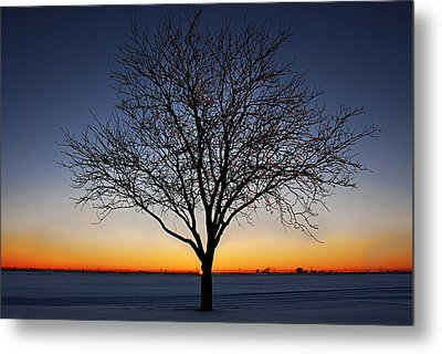 Nature's Light Metal Print by Melany Sarafis