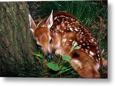 Nature's Precious Creation Metal Print by Skip Willits
