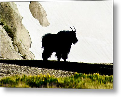 Metal Print featuring the photograph Nature's Silhouette by Colleen Coccia