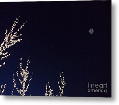 Nature's Watchful Eye Metal Print
