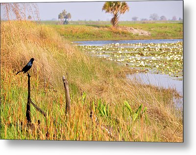 Near And Far Metal Print by Jan Amiss Photography