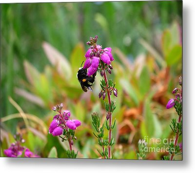 Nectar Quest Metal Print by Gayle Swigart