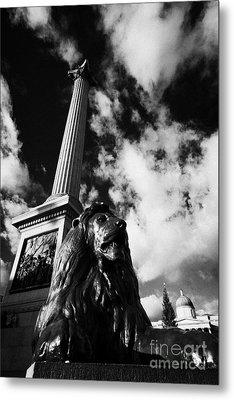 nelsons column and lion inTrafalgar Square London England UK United kingdom Metal Print by Joe Fox