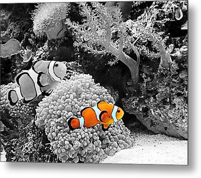 Nemo At Home Metal Print
