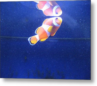 Nemo Metal Print by Davor Sintic
