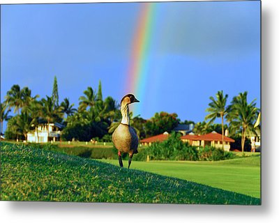 Metal Print featuring the photograph Nene At The End Of The Rainbow by Lynn Bauer