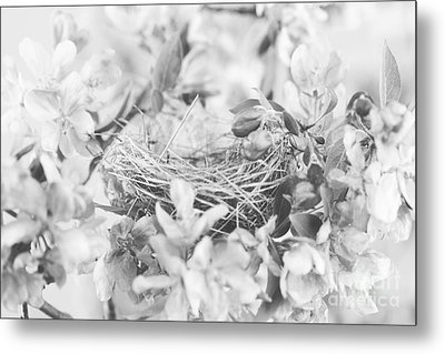 Nest In Black And White Metal Print by Stephanie Frey