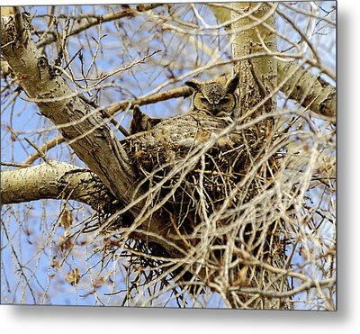 Metal Print featuring the photograph Nesting Owl  by Stephen  Johnson