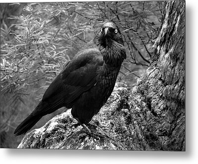 Nevermore - Black And White Metal Print