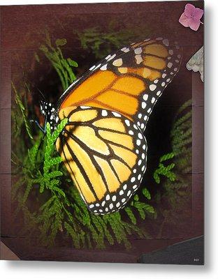 New Born Butterfly Metal Print by Debra     Vatalaro