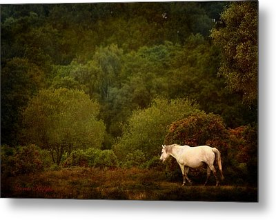 Metal Print featuring the photograph New Forest Walk by Dorota Kudyba