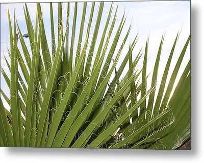 New Mexico Plant Metal Print by Snow  White