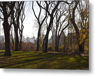 New York Trees Metal Print by Snow  White