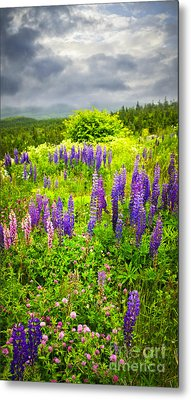 Newfoundland Meadow Metal Print by Elena Elisseeva