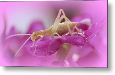 Newly Hatched Insect Metal Print by Maureen  McDonald