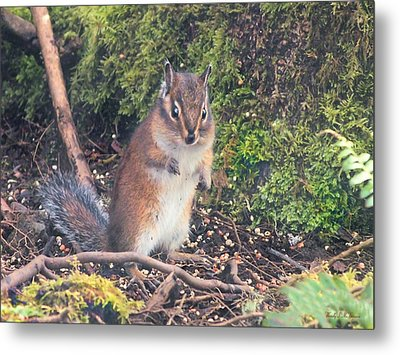 Metal Print featuring the photograph Newport Squirrel by Wendy McKennon