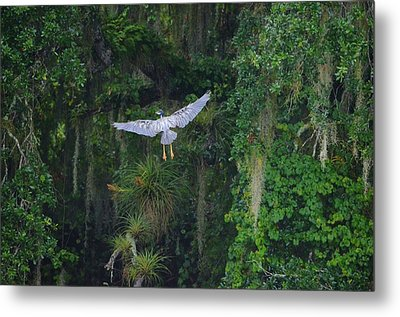 Night Flight Metal Print by Lynda Dawson-Youngclaus