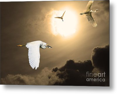 Night Of The White Egrets . Partial Sepia Metal Print by Wingsdomain Art and Photography
