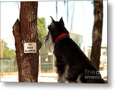 No Dogs Allowed Metal Print
