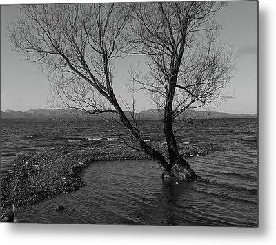 No Tree Is An Island Metal Print by Jeff Moose