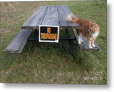 Metal Print featuring the photograph No Trespassing by Jeannette Hunt
