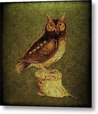 Noctua Aurita Minor Metal Print by Li   van Saathoff