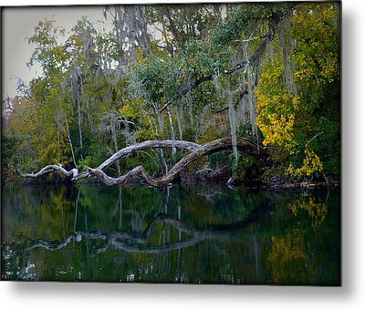 North Florida River Reflections Metal Print by Carla Parris