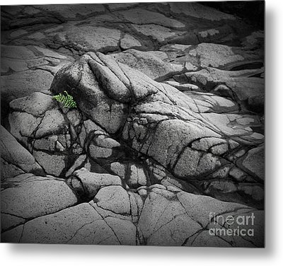 North Shore Fern Metal Print by Perry Webster