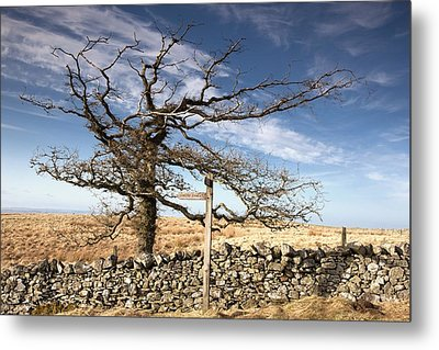 Northumberland, England A Leafless Tree Metal Print by John Short