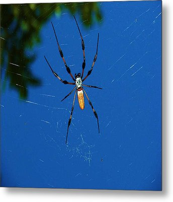 Not-so Itsy-bitsy Spider Metal Print