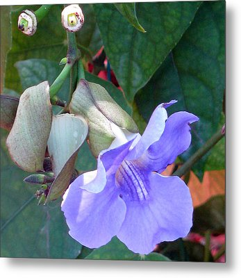 Metal Print featuring the photograph Nothing But Blue Sky by Debi Singer