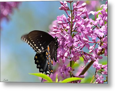 Nothing Says Spring Like Butterflies And Lilacs Metal Print