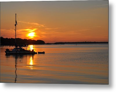 Nova At Sundown Metal Print by Tiffney Heaning