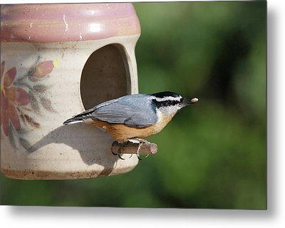 Nuthatch At Feeder Metal Print