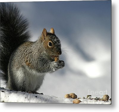 Nutty About Winter Metal Print