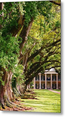 Oak Alley Trees Metal Print by Jeanne  Woods
