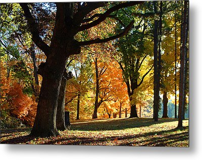 Oak In Autum Woods Metal Print by Peg Toliver