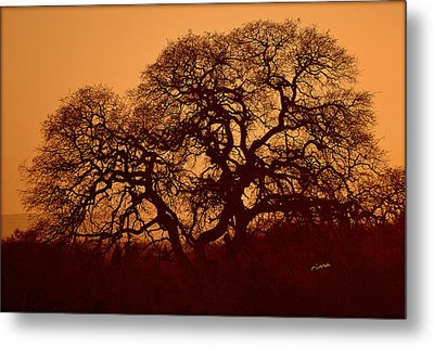 Metal Print featuring the photograph Oak Tree At Sunset by Rima Biswas