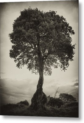 Metal Print featuring the photograph Oak Tree by Hugh Smith